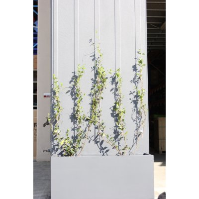 Green Wall Vertical Length - GreenLine