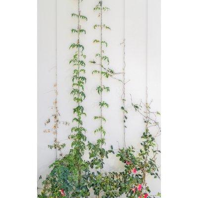 Garden Trellis Kit 7.5 Metre